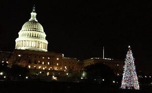 Colorado Tree Becomes Capitol Tree