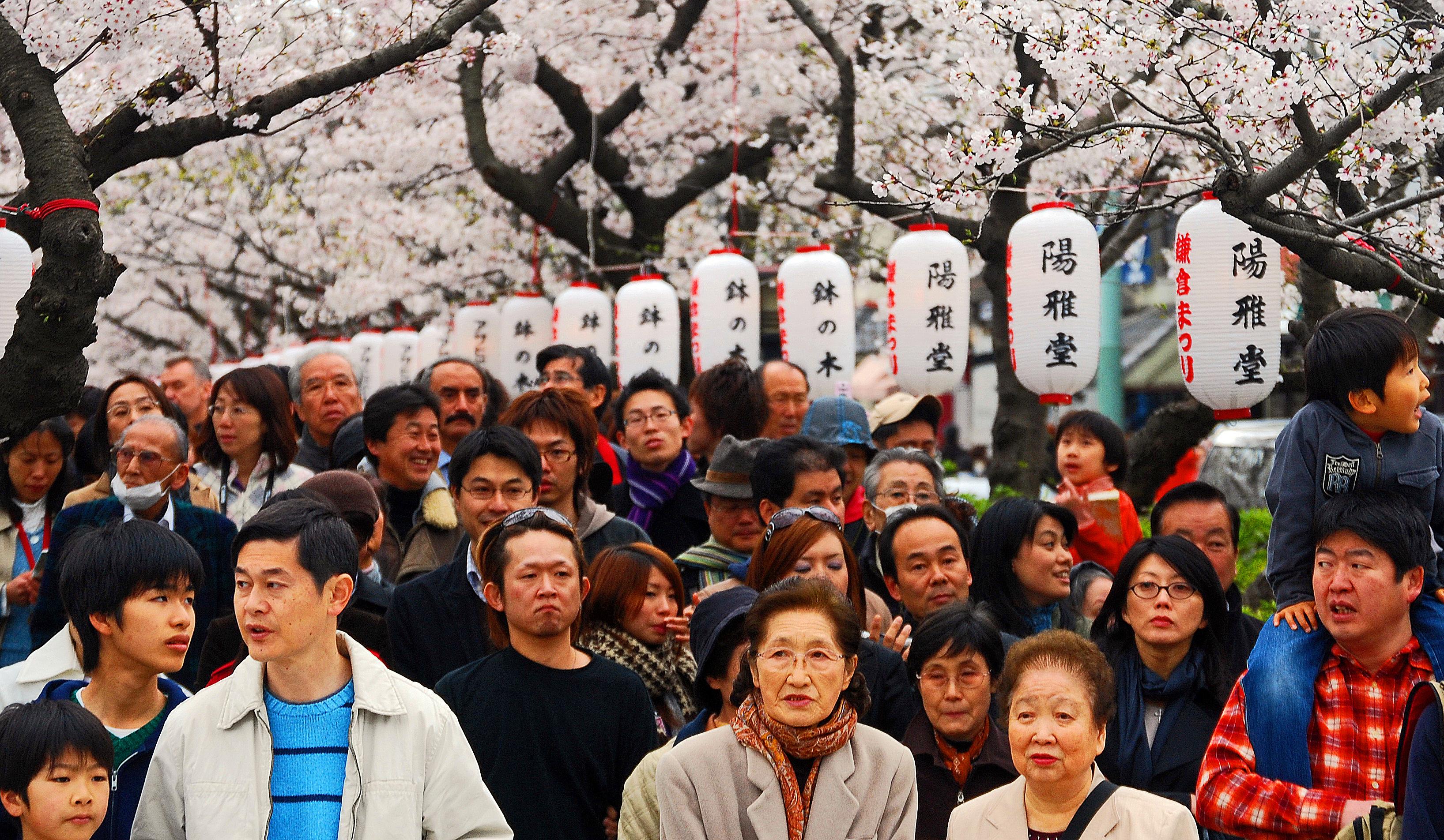 Japan blossom scene
