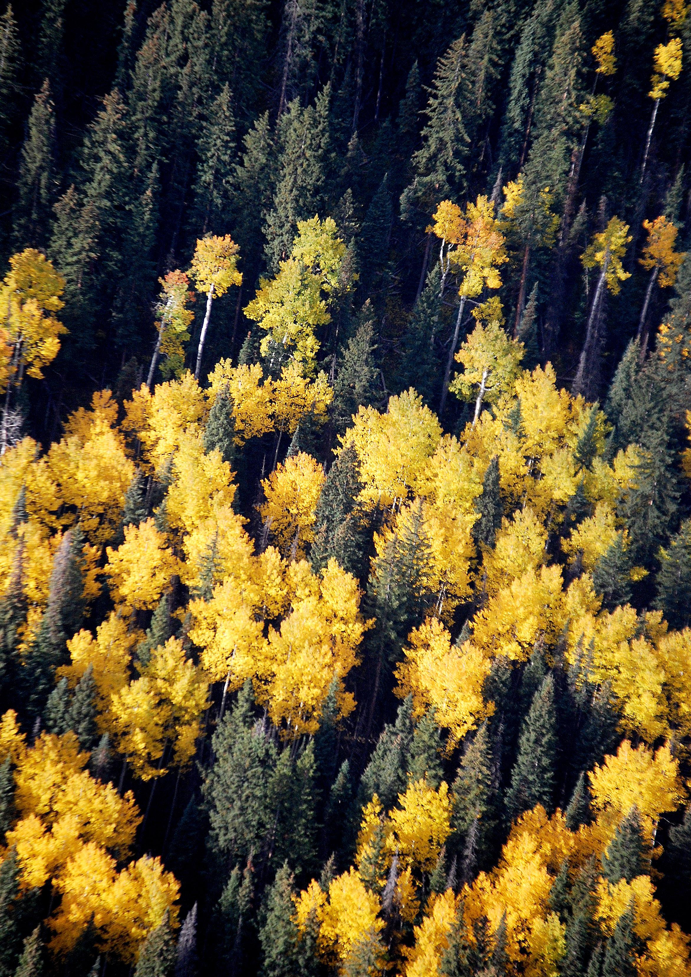 Roadless trees