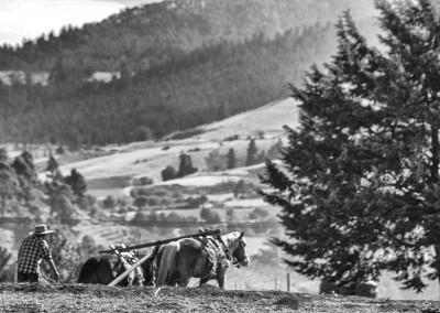 Horse plow-Edit